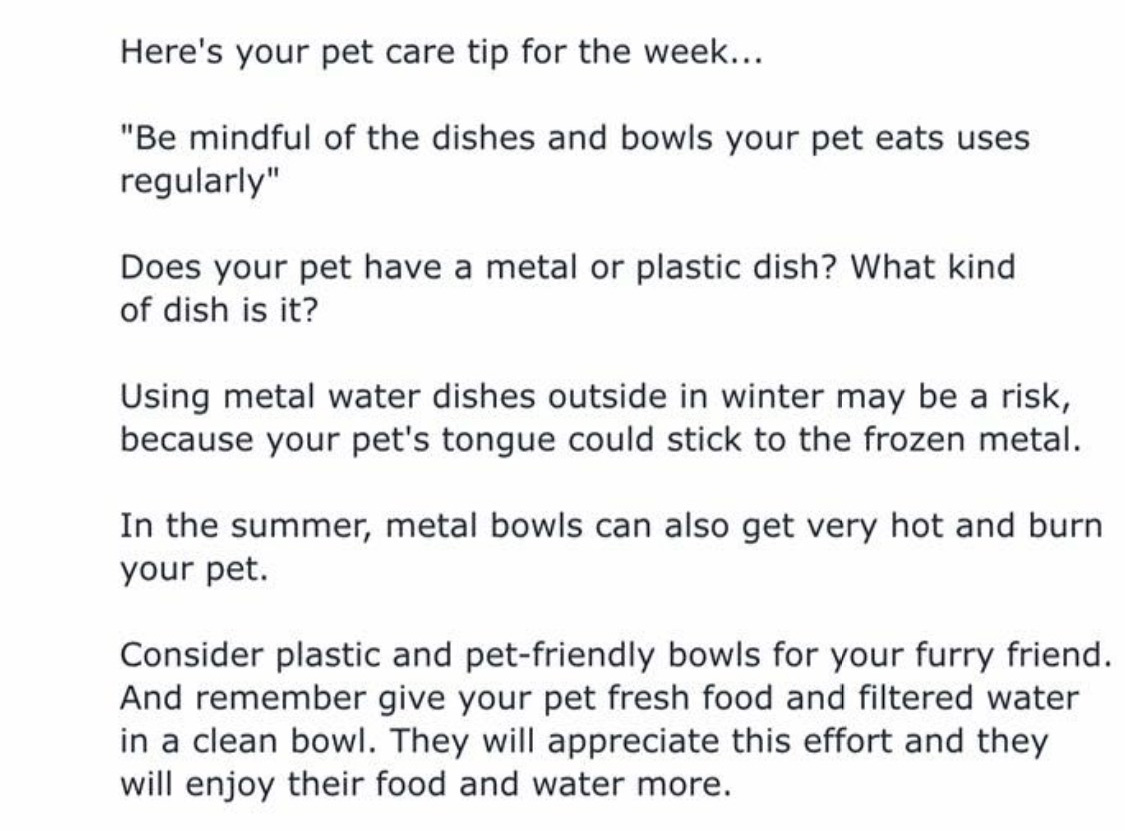 tips about pet's meal bowls
