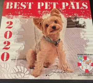 PPP dog calendar 2020