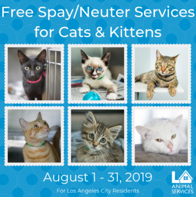 Los Angeles Animal Services Free Cat Spay/Neuter in August 2019